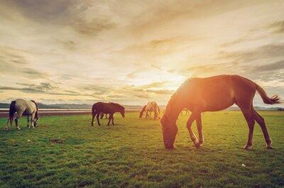 Affisch Hästar på fältet gräs med solnedgång vintage och retro stil