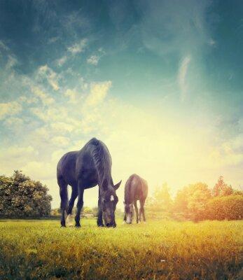 Affisch Hästar som betar i höst äng bakgrund av träd och himmel