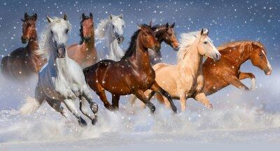 Affisch Hästflock springa fort på vintern snöfält