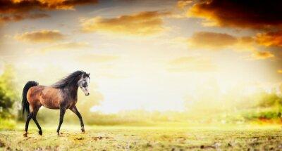 Affisch Hingst häst kör trav över hösten natur bakgrund, banner