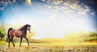 Affisch Hingst häst kör trav över naturen bakgrund med vacker himmel, banderoll