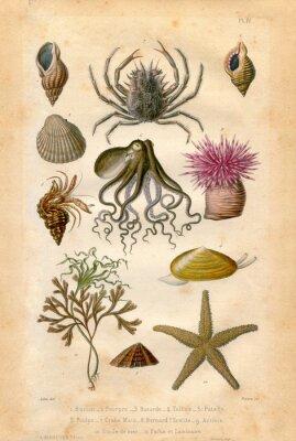 Affisch Histoire naturel: Fond Marin