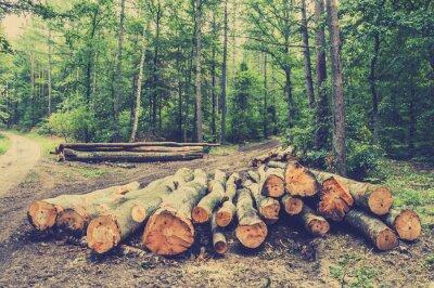 Affisch Högen av trä i skogen vid vägen, tappningfoto.