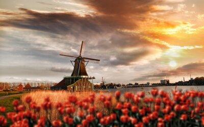 Affisch Holländska väderkvarnar med röda tulpaner stänga Amsterdam, Holland