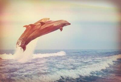 Affisch hoppa delfiner, instagram