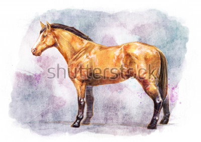 Affisch HORSE SKETCH / WATER COLOR PAINTING
