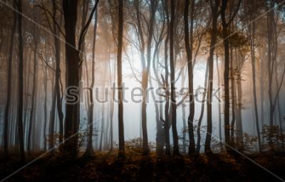 Affisch Höstdimmig skog. Balkanbergen, Bulgarien.