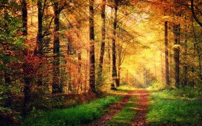 Affisch Höstskog landskap med strålar av varmt ljus