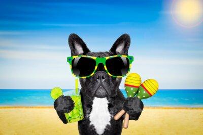 Affisch hund sommar strand cocktail