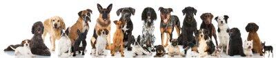 Affisch hundar