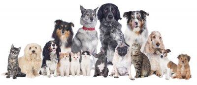 Affisch Hundar och katter Grupp