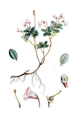 Affisch Illustration av blomma