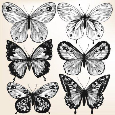 Affisch Insamling av vektor handritad detaljerade fjärilar för design