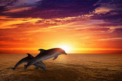 Affisch Jumping delfiner
