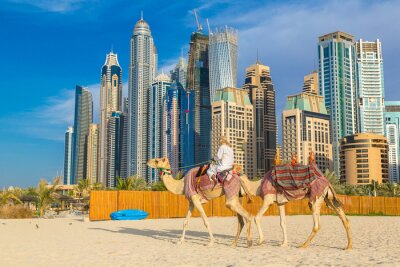 Affisch Kamel i Dubai Marina