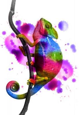 Affisch kameleont - färger