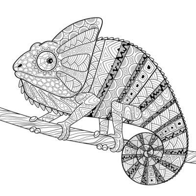Affisch Kameleont. Vuxen antistress målarbok. Svart och vitt handritad klotter för målarbok