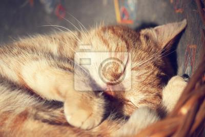 Affisch katt sover
