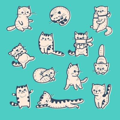 Affisch kattungar
