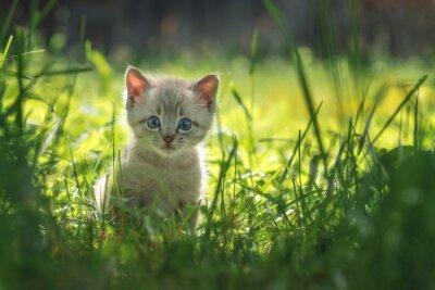 Affisch kattunge
