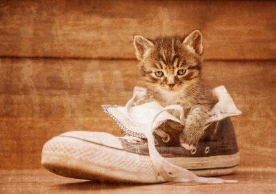 Affisch Kattunge sitter i en sko, vintage avbildar