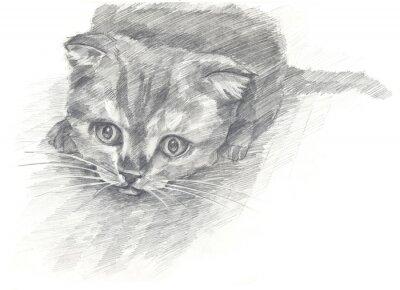 Affisch kattunge svart och white.Painted händer. Grafisk stil.