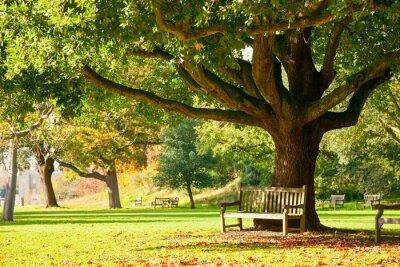 Affisch Kew Gardens Park