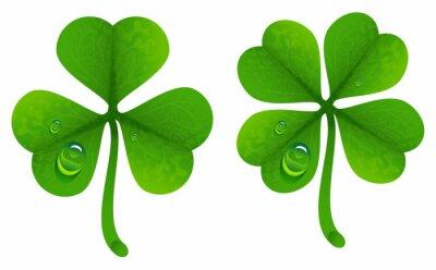 Affisch Klöver blad med daggdroppar. Lucky Clover blad. Fyra blad och treflikiga klöver