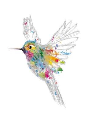 Affisch kolibri