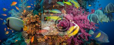 Affisch Koraller och fiskar