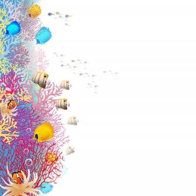 Affisch korallrev