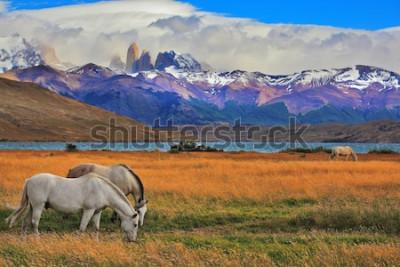 Affisch Lake Laguna Azul i bergen. På stranden av sjön betar hästar. Imponerande landskap i nationalparken Torres del Paine, Chile