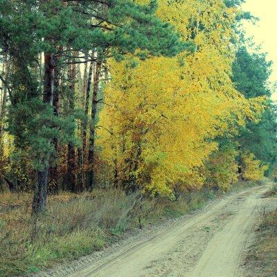 Affisch Landsväg i en vacker höstskog