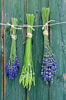 Affisch lavendel-