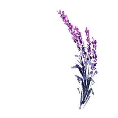 Affisch Lavendel blomma akvarell illustration. Rak lavendelgren. Kärlek och äktenskap. Enkel lavendel twig. Isolerad raster