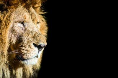 Affisch Leone - lejon