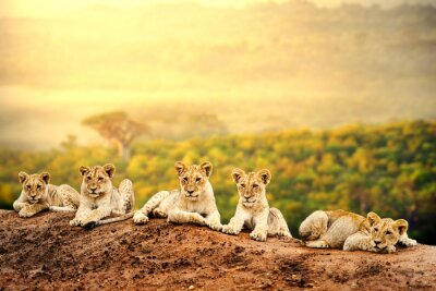 Affisch Liongröngölingar väntar tillsammans.