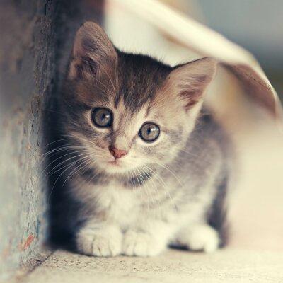 Affisch lite gullig kattunge lokalisering utomhus