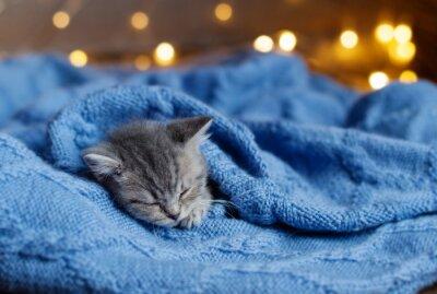 Affisch liten kattunge sover under en filt
