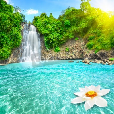 Affisch Lotusblomma i vattenfall pool