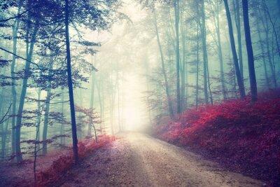 Affisch Magisk skogsväg