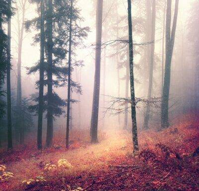 Affisch Magiska höstsäsong färg skogsträd bakgrund med ljust orange röd bana. Vackra säsongs skogsmark.
