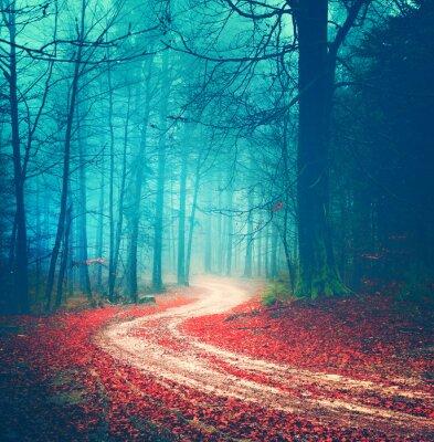Affisch Magiska vintage skogsväg