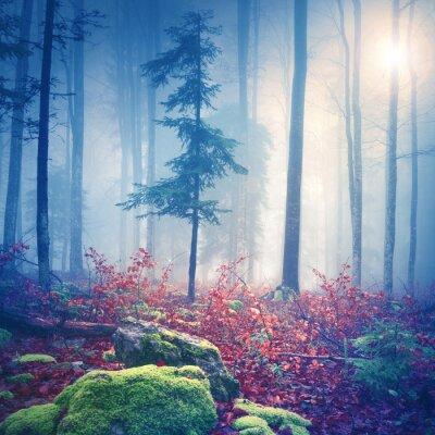 Affisch Magiskt ljus i dimmigt skog med sol