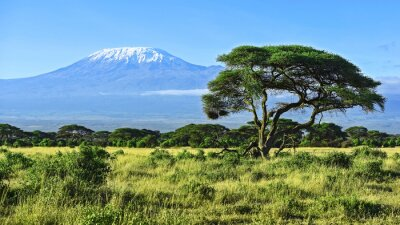 Affisch Mount Kilimanjaro