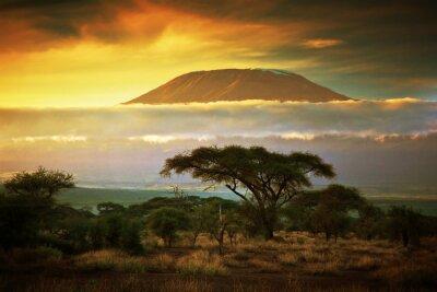 Affisch Mount Kilimanjaro. Savanna i Amboseli, Kenya