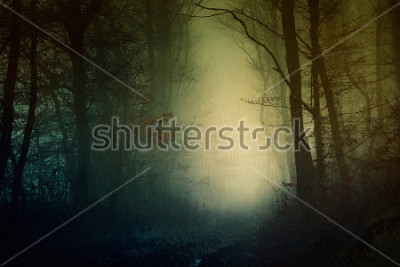 Affisch Mystisk mörk skogs tapeter