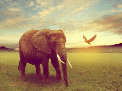 Affisch naturen, inklusive en elefant africa