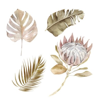 Affisch Old dry swirling tropical leaves and flower watercolor vector illustration isolated on the white background. Closeup view palm leaf in boho style. Hand drawn leaves and protea in sepia color scheme.
