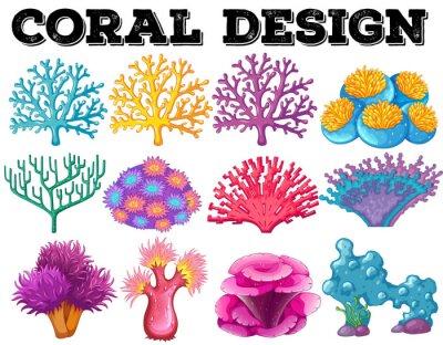 Affisch Olika typer av korall konstruktion